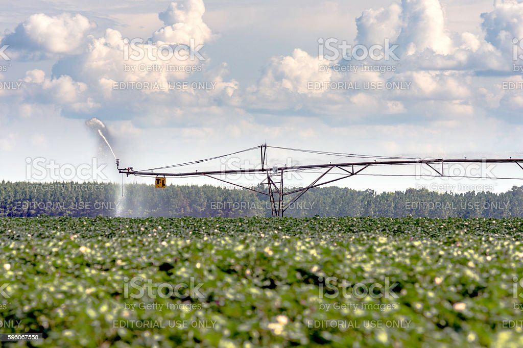 T-L Irrigation on a cotton field stock photo
