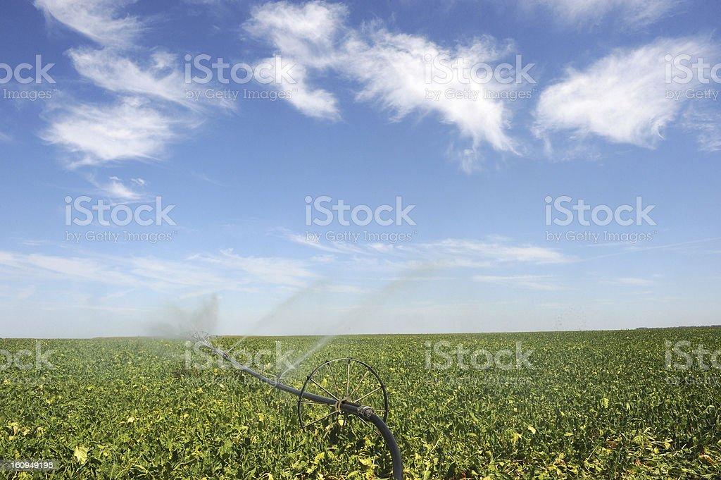 irrigation on crop field stock photo