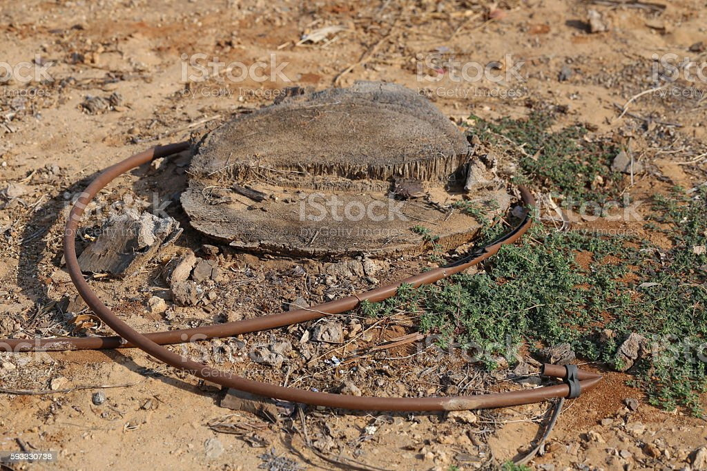 Irrigation Pipe Around a Cut Off Tree Trunk. stock photo
