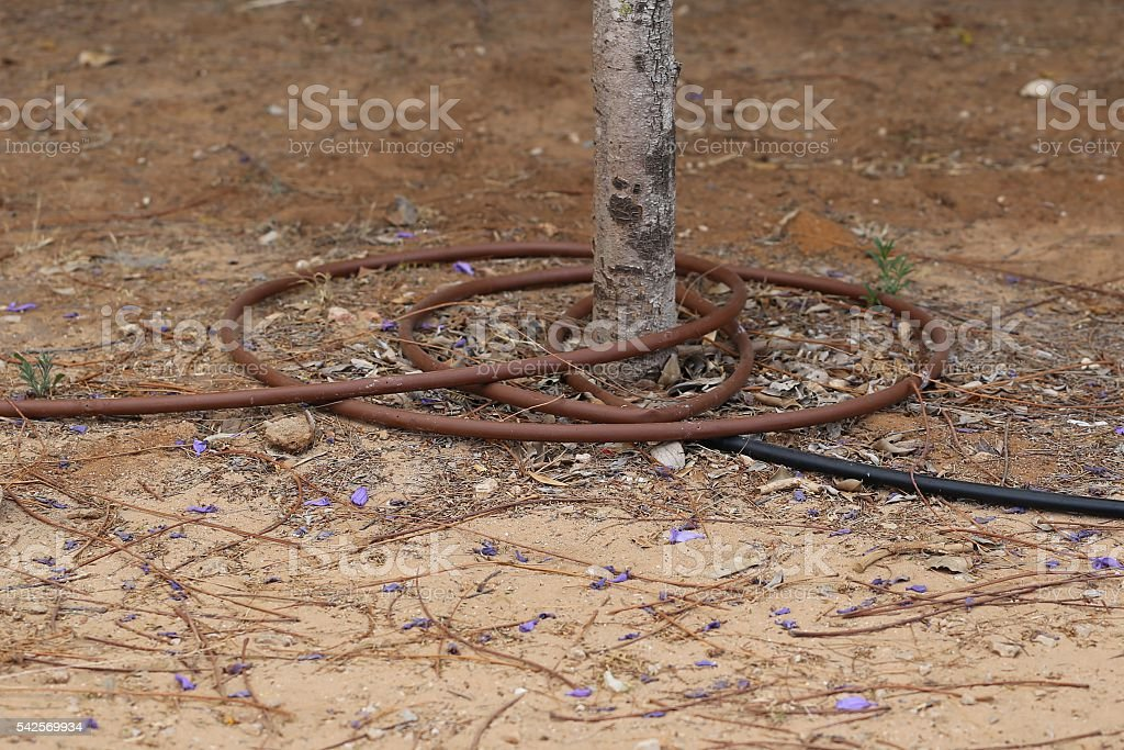 Irrigation Pipe Surrounding a Tree Trunk stock photo
