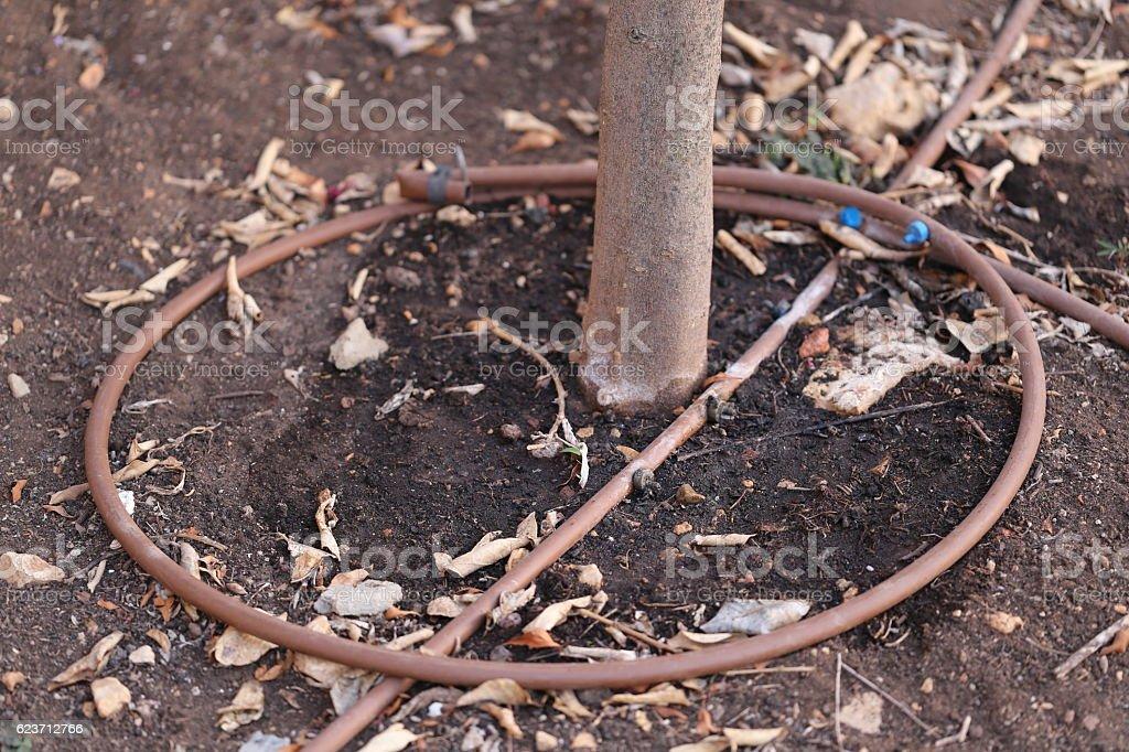 Irrigation Pipe surrounding Around a Tree Trunk. stock photo