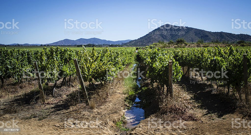 Irrigation runs through the vineyards of Casablanca, Chile stock photo
