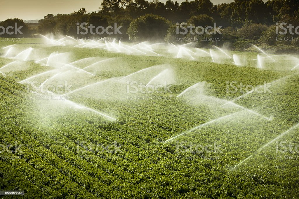 Irrigation sprinkler watering crops on fertile farm land stock photo