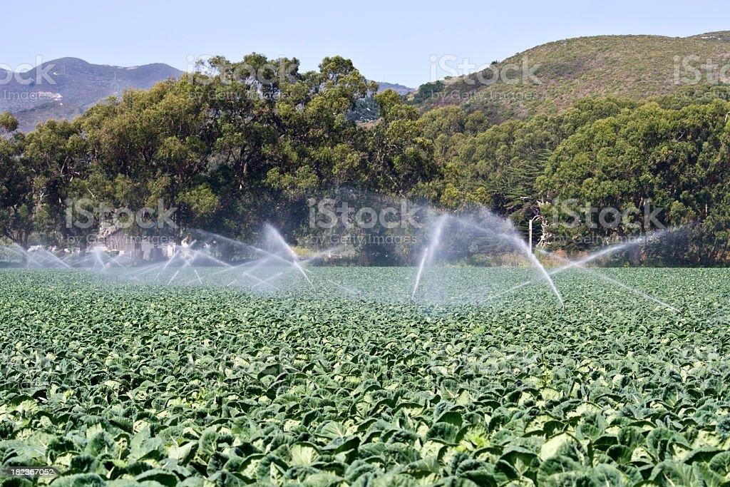 Irrigation Sprinklers stock photo