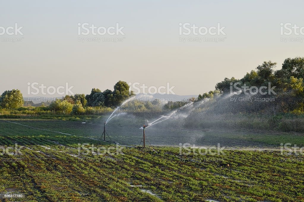 Irrigation system in field of melons. stock photo