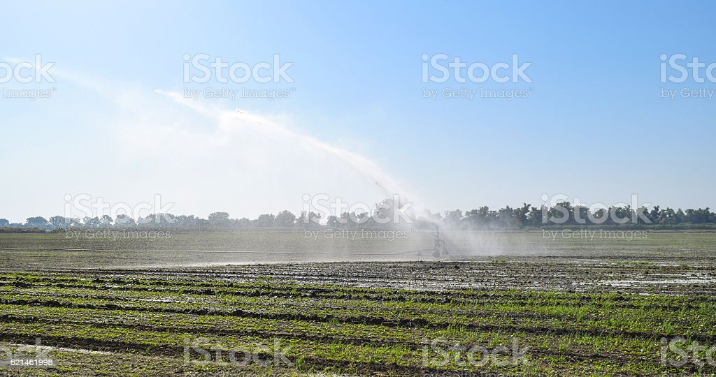 Irrigation system in the field of melons stock photo