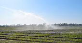 Irrigation system in the field of melons