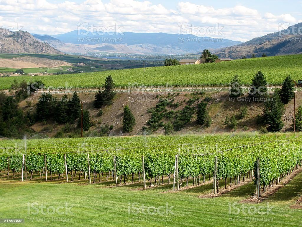 Irrigation system on a wine field, Okanagan Valley. stock photo