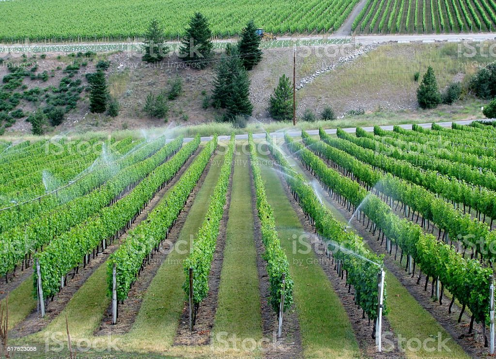 Irrigation system on a wine field, Okanagan Valley stock photo