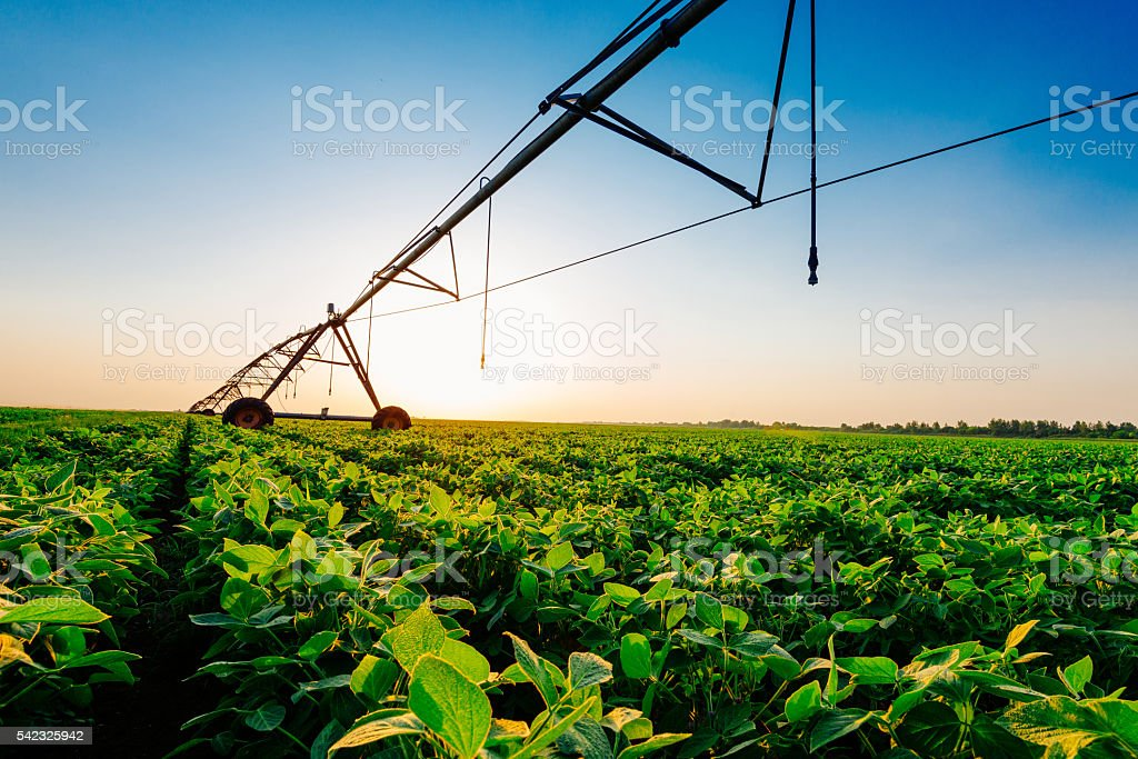 Irrigation system on soybean field in sunset on farm stock photo