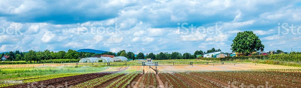 Irrigation system on the wheat field at summer sunset stock photo