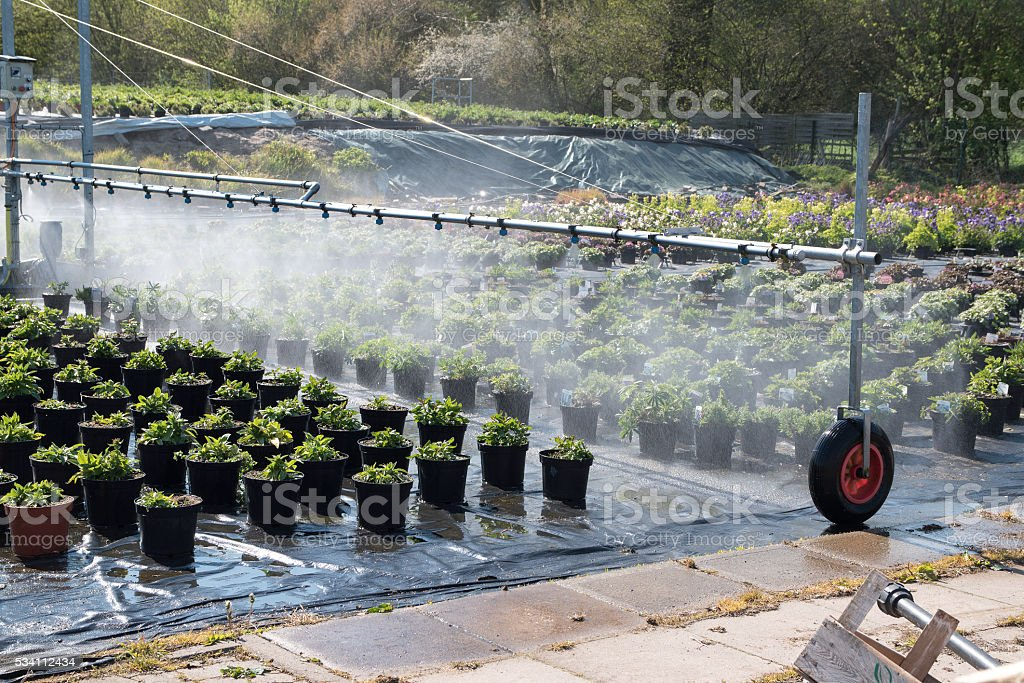 irrigation system used for watering the potted plants stock photo