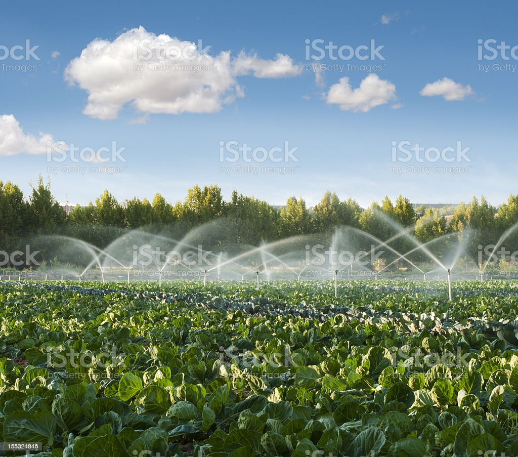 Irrigation systems in a vegetable garden stock photo