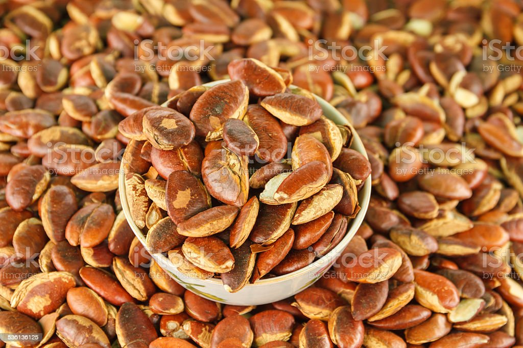 Irvingia malayana seeds stock photo