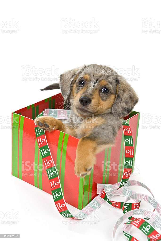 Is Christmas Over Yet? royalty-free stock photo