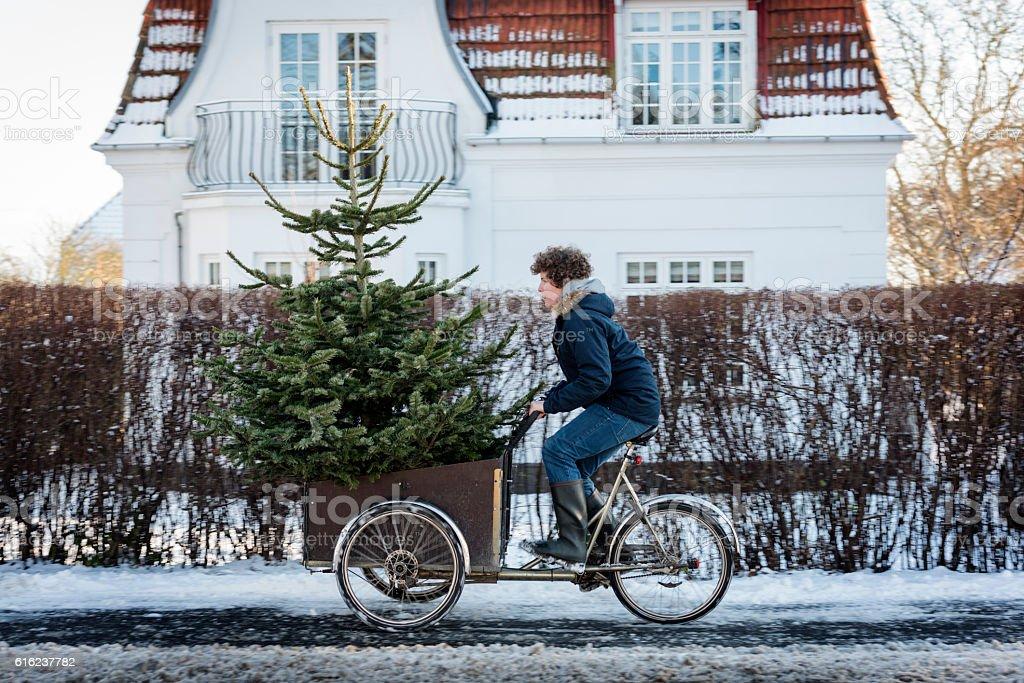 Is This Christmas Tree Big Enough? stock photo