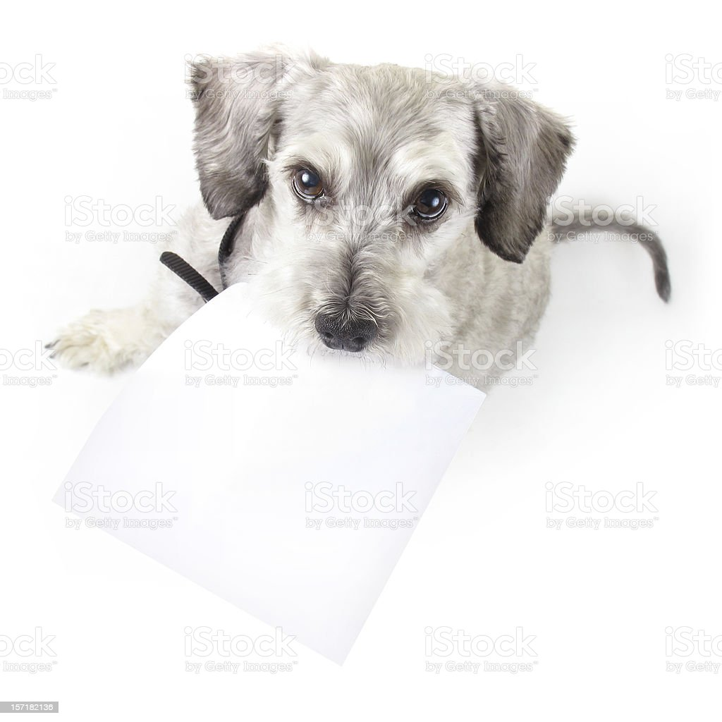 Is your dog trying to tell you something? stock photo