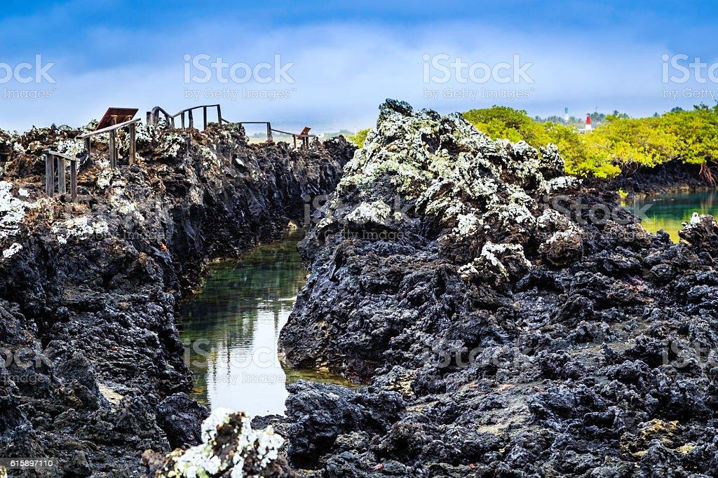Isabella an Island of the Galapagos stock photo