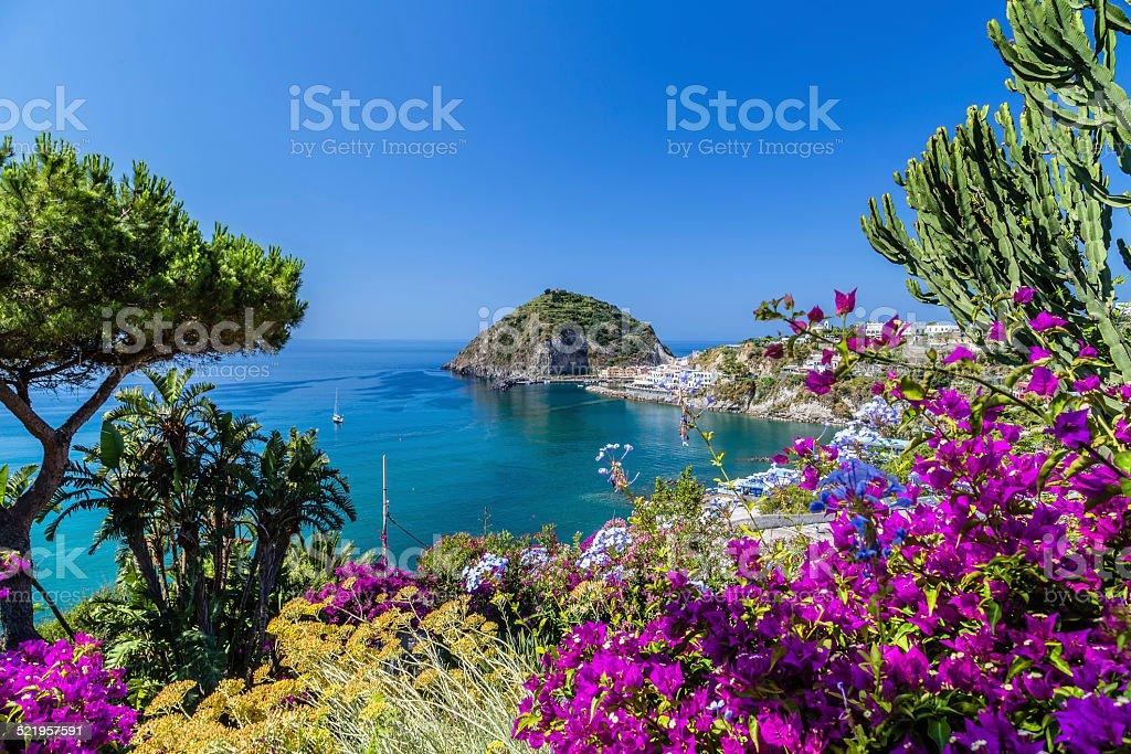 Ischia and Bougainvillea glabra stock photo