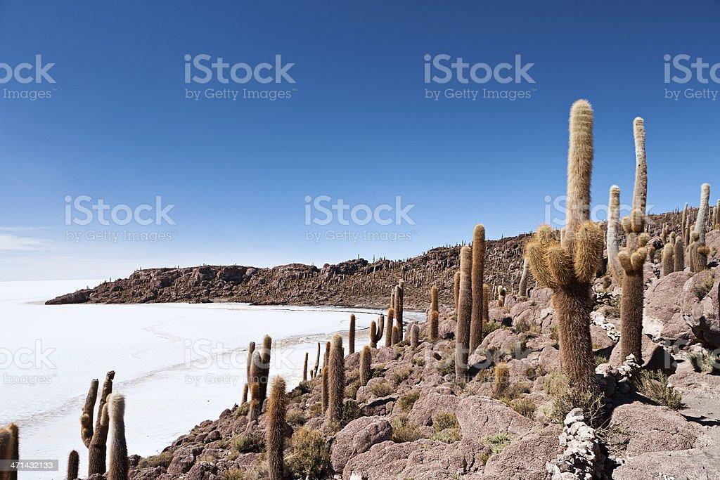 Isla del Pescado on Salar de Uyuni stock photo
