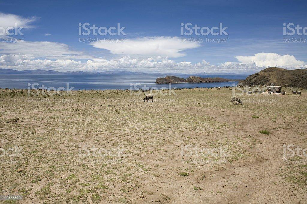 Isla del Sol - Titicaca royalty-free stock photo