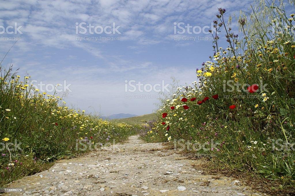 Island Delos/Greece royalty-free stock photo