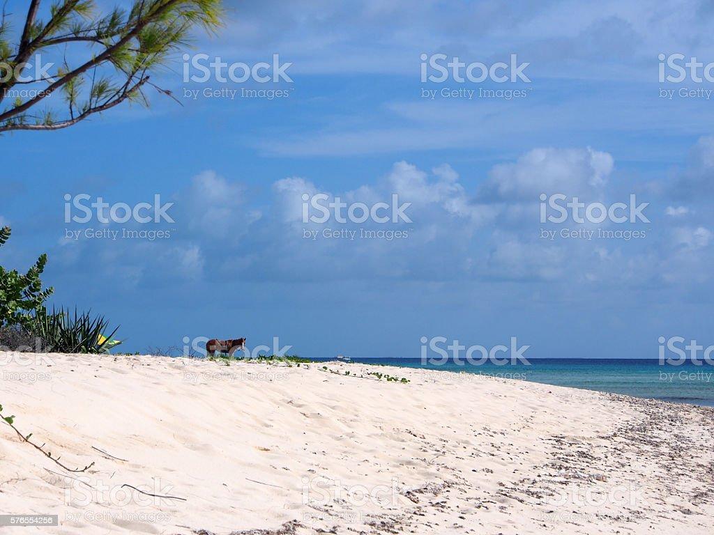 Island Horse stock photo