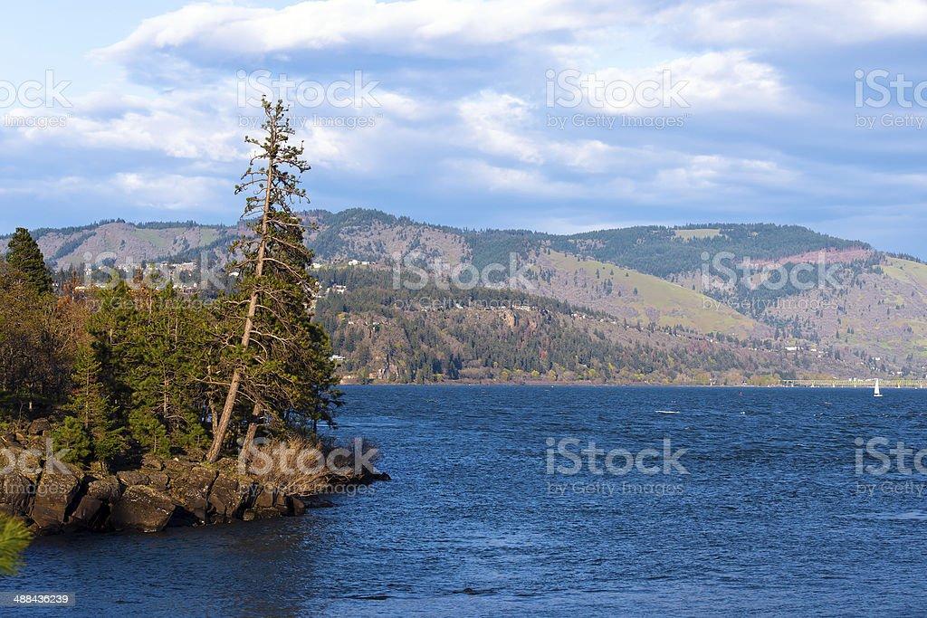Di vita dell'isola di sempreverde alberi che crescono sui rocks foto stock royalty-free