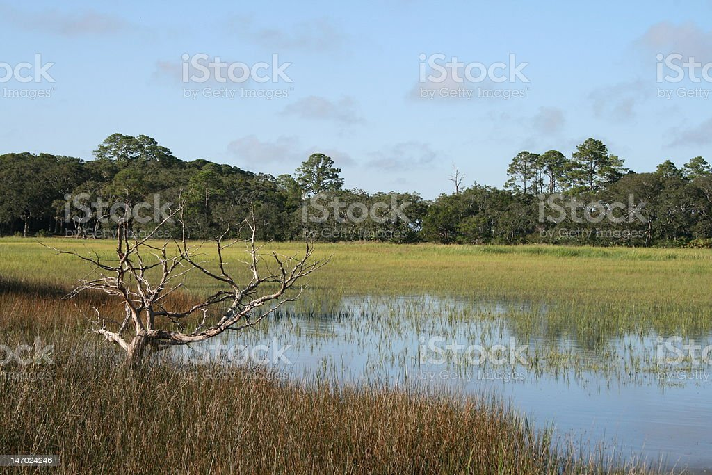 Island Marsh stock photo