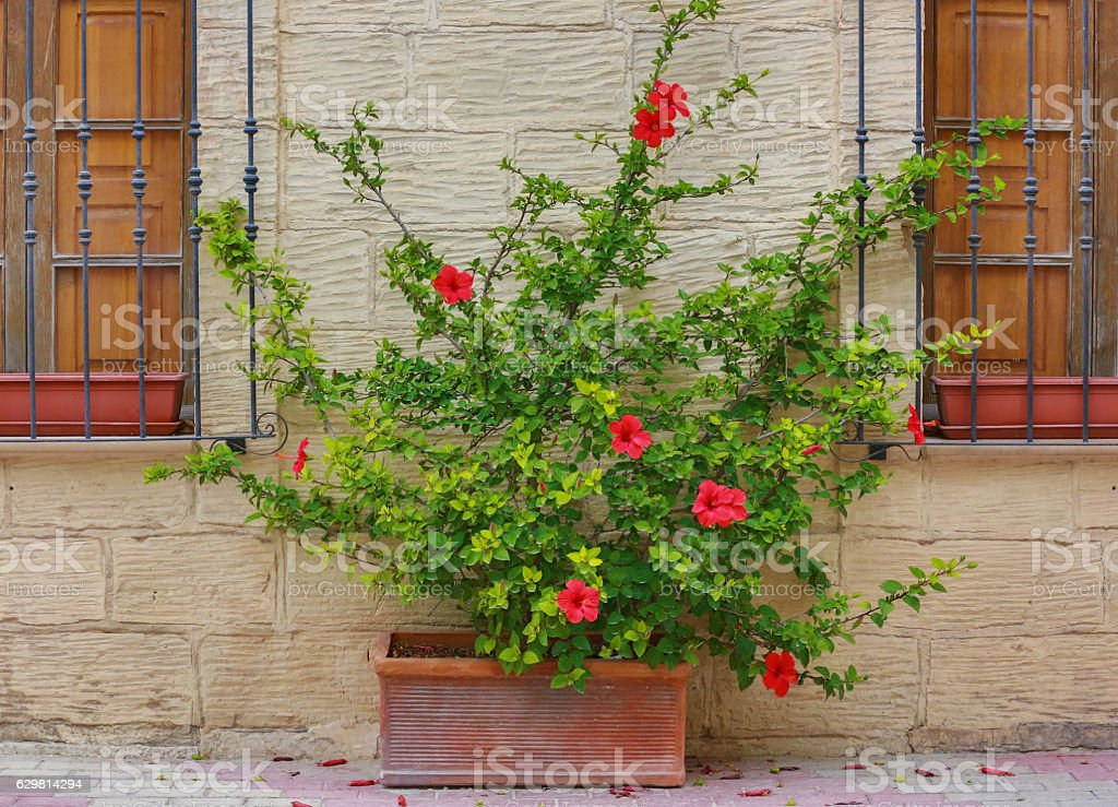 Island of Malta -  beautiful flowers outside a property stock photo