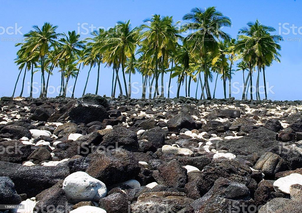 Island of Palms royalty-free stock photo