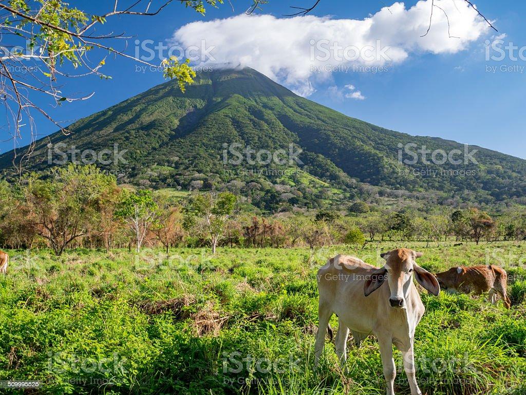 Island Ometepe in Nicaragua stock photo