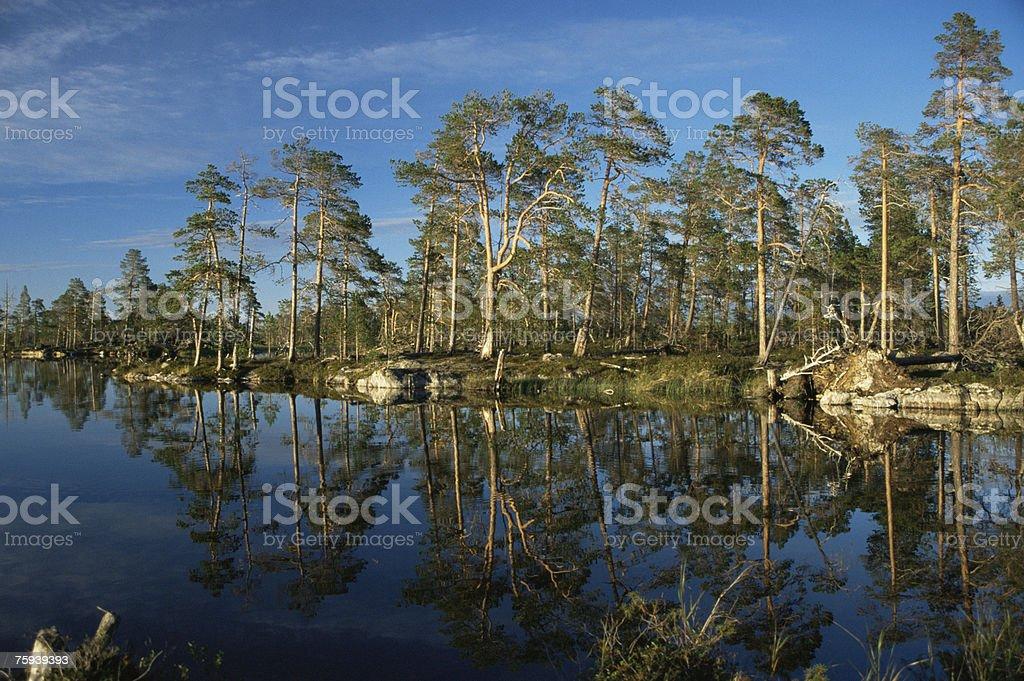 Island on lake inari royalty-free stock photo