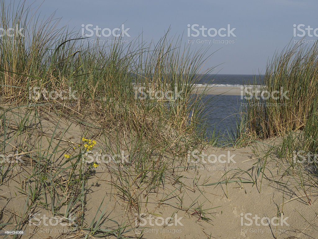 insel stock photo