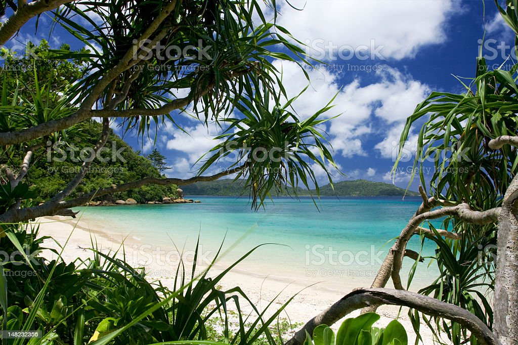 Island view of the ocean, palm trees stock photo