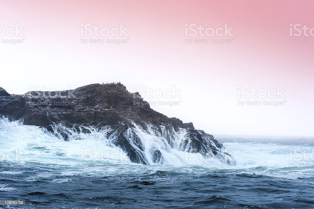 Island wilderness stock photo