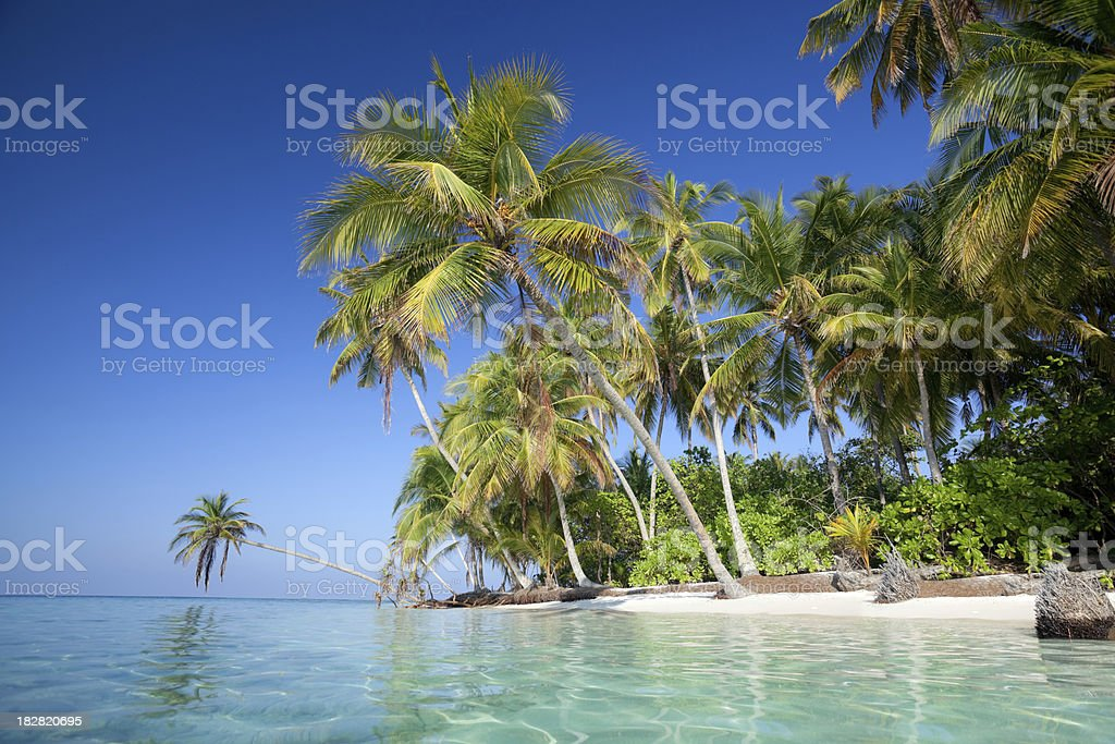island with palmtrees and calm ocean royalty-free stock photo