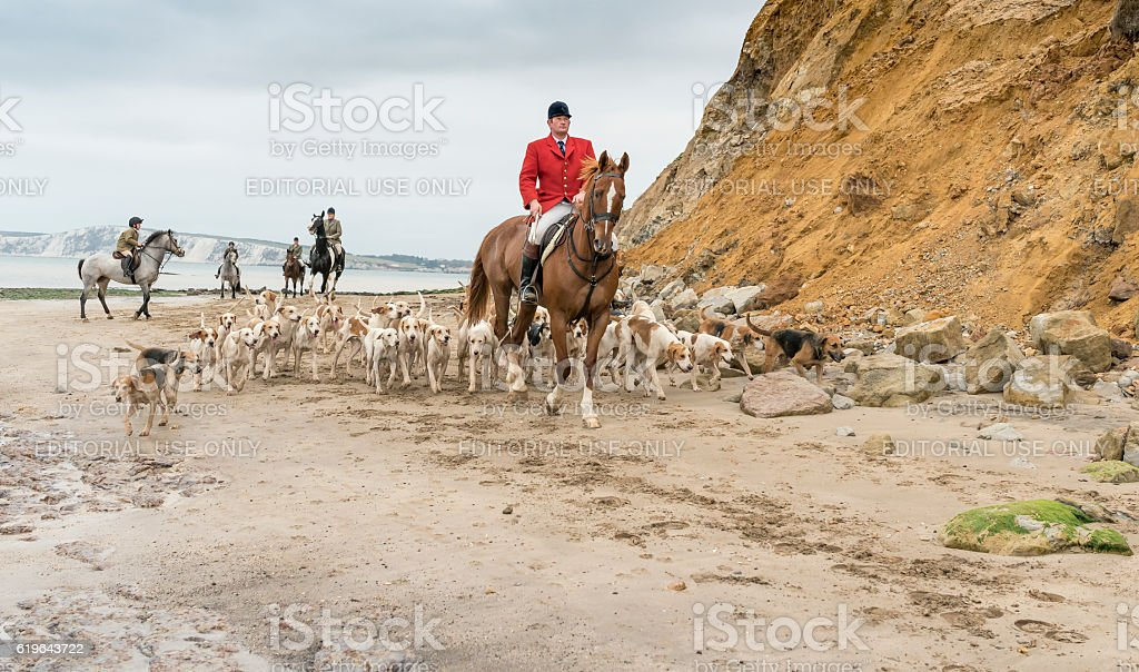 Isle of Wight Foxhounds stock photo