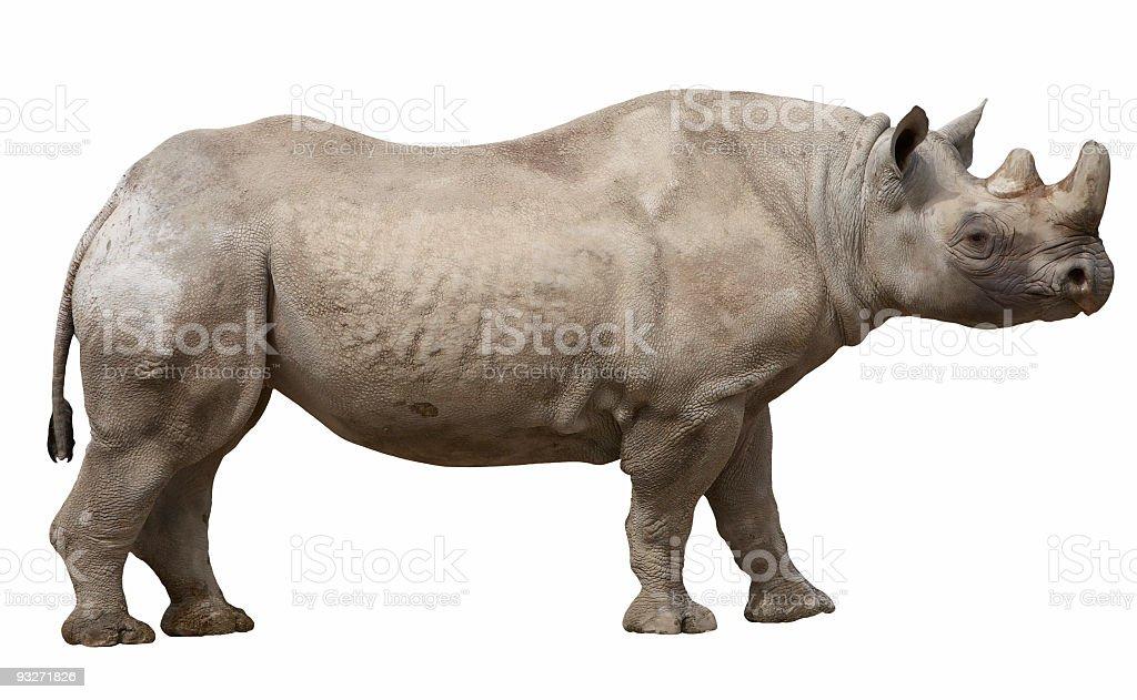 Iso Rhino royalty-free stock photo