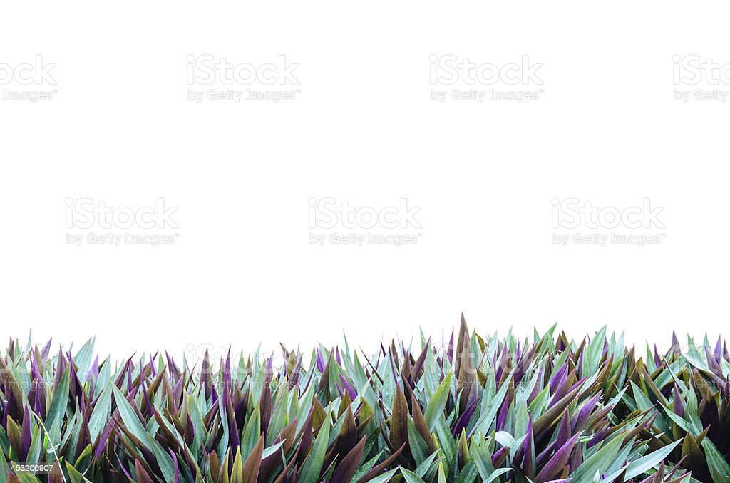 Isolate Grass Frame stock photo