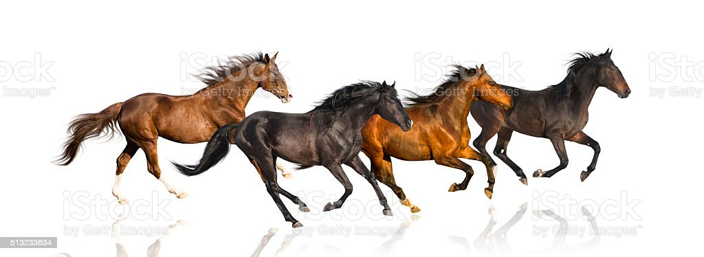 isolate of four galloping horse on the white background stock photo
