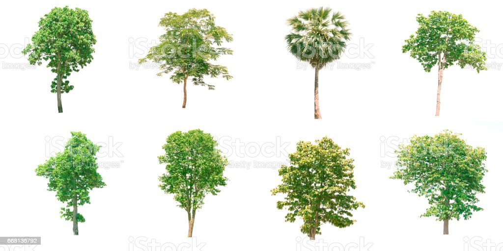 Isolate tree. stock photo