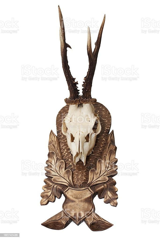 Isolated antlers with skeleton of head royalty-free stock photo