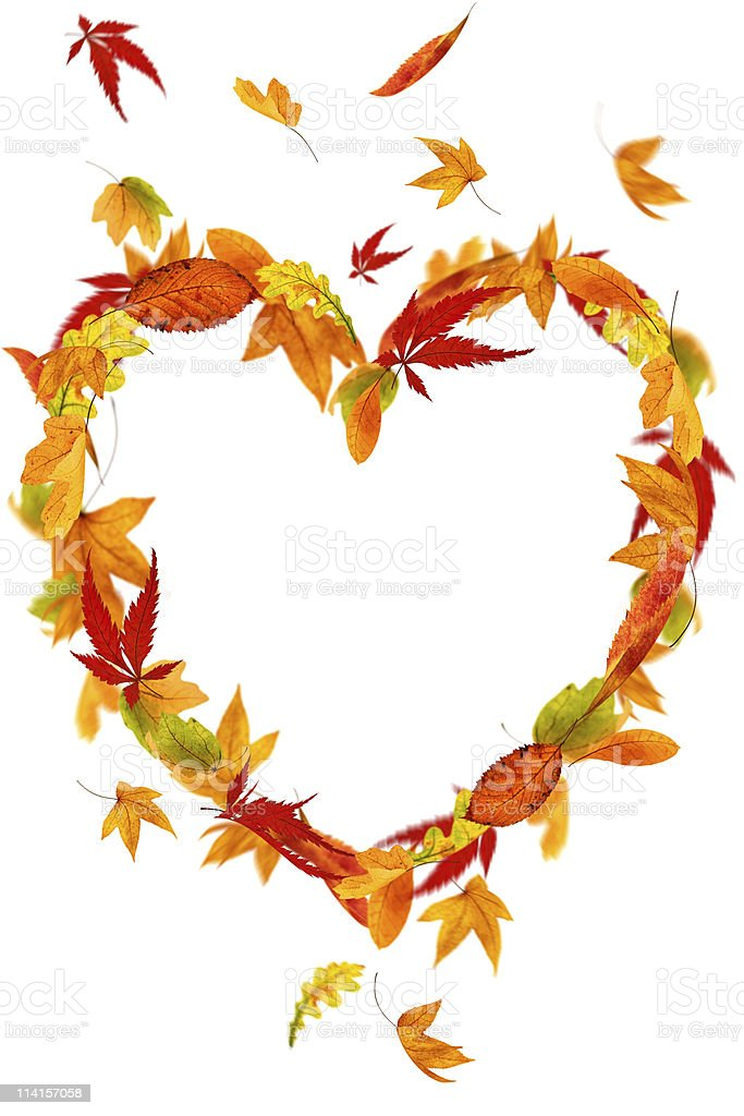 Isolated Autumn Heart royalty-free stock photo