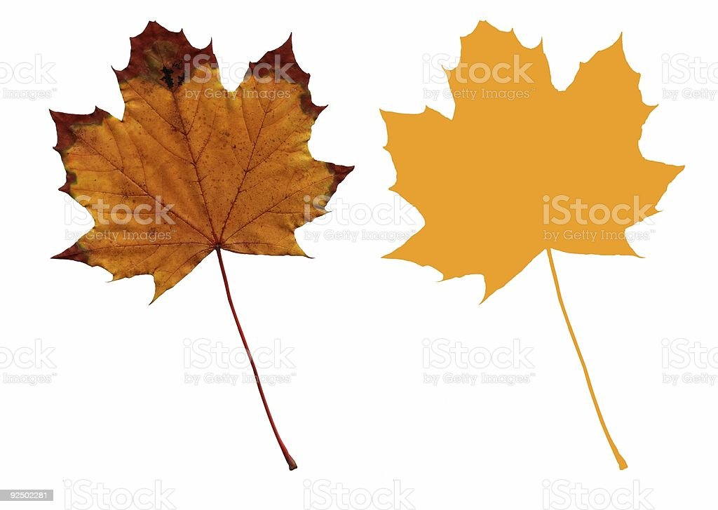 Isolated Autumn Maple Leaf (Yellow with Outline) royalty-free stock photo