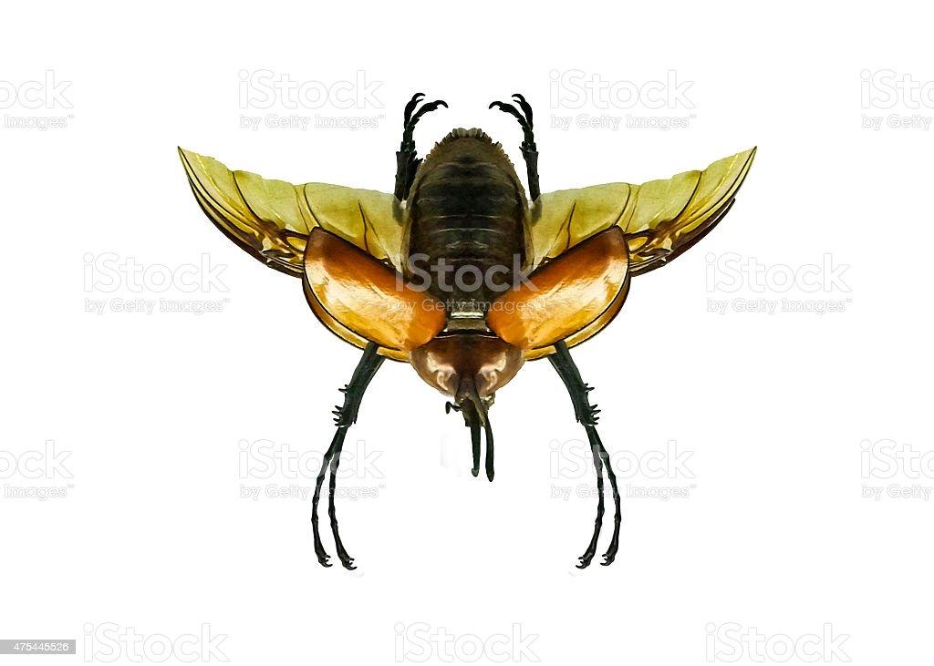 Isolated Beetle stock photo