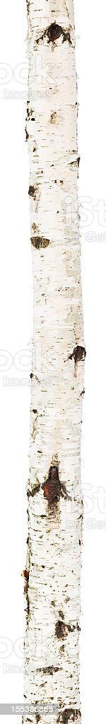 Isolated birch trunk royalty-free stock photo