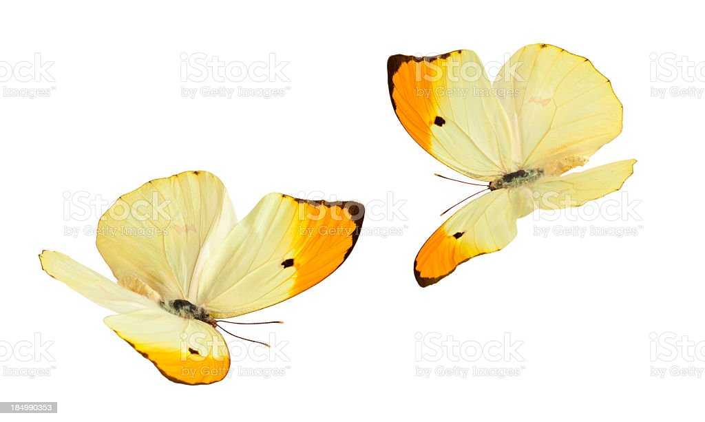 Isolated Butterflies. royalty-free stock photo