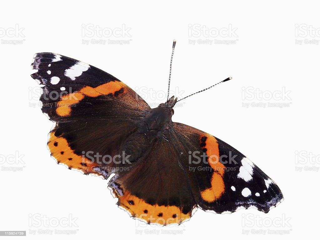 Isolated butterfly 01 stock photo