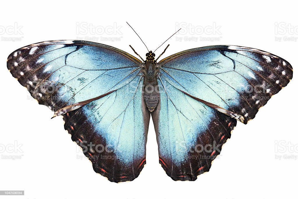 Isolated butterfly with clipping path on white background stock photo